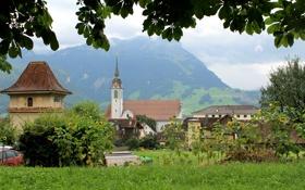 Обои Schwyz, ветки, городок, подсолнух, листья, леса, трава