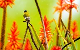 Обои цветы, птица, растение, алоэ, агава