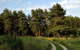 Картинка дорога, поле, пейзаж, природа