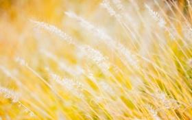 Обои поле, трава, макро, луг