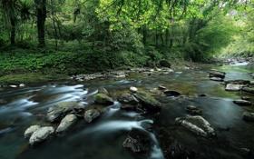 Картинка лес, лето, река
