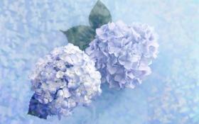 Обои цветы, голубые, нежно