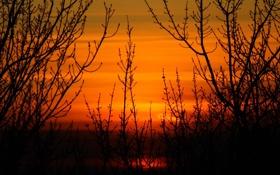 Картинка небо, закат, оранжевый, ветки