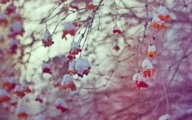 Картинка холод, зима, небо, ягоды, февраль, боке