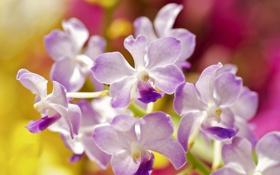 Картинка сиреневая, орхидея, цветы