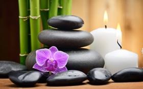 Картинка свечи, бамбук, орхидея, спа камни