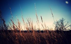 Обои небо, фото, лето, поле, колоски, обои, обработка