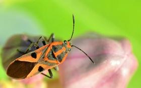 Картинка природа, лист, жук, насекомое