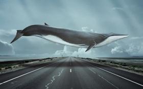 Картинка дорога, лучи, кит, летать
