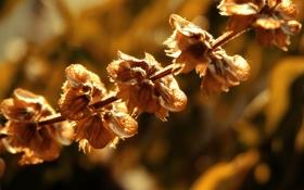 Обои осень, солнце, макро, свет, природа, nature, autumn