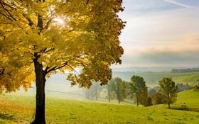 Картинка поле, осень, дерево