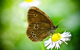 Обои зеленый, фон, бабочка, цвето