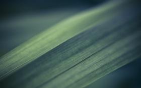Обои зелень, трава, макро, травинка, macro