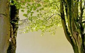 Картинка деревья, природа, весна