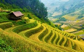 Картинка зелень, деревья, горы, поля, домики, плантации