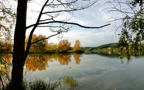Обои вода, деревья, природа, озеро, река, фото, дерево