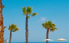 Обои море, небо, пальмы, зонт, горизонт