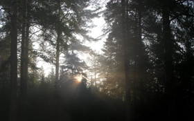 Обои лучи, свет, деревья, природа, фото, леса