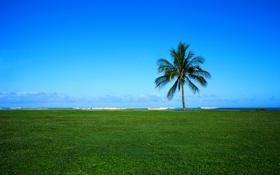 Обои море, небо, трава, облака, пейзаж, пальма, обои