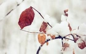 Картинка зима, листья, макро, природа, осенние листья