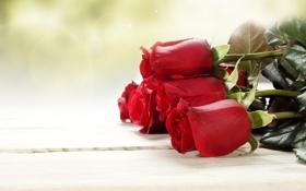 Картинка листья, цветы, розы, букет, бутоны
