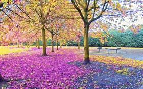 Картинка листья, осень, скамья, сквер, деревья, парк