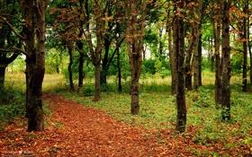 Картинка листья, деревья, тропа, Осень