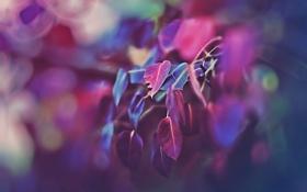 Обои листья, деревья, боке, фото в розовых тонах