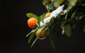 Картинка листья, снег, ягоды, фон, ветка