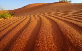 Обои песок, небо, солнце, свет, растение, тени, sky