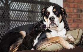 Картинка щенок, дом, собака