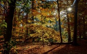 Обои осень, листья, деревья, парк, Нидерланды, лучи солнца, Maurick Castle Park