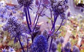 Обои цветы, ветки, растение, шишки, колючка