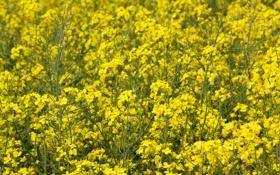 Обои green, yellow, flowers