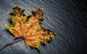 Картинка осень, макро, лист, жёлтый, цвет