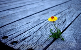Обои цветок, обои, фото, фон, доски, макро