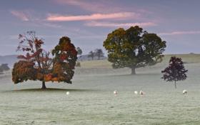 Картинка иней, трава, деревья, туман, овцы, пастбище