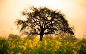 Обои поле, цветы, природа, дерево, жёлтые