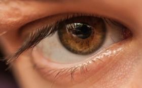 Обои макро, глаз, фон