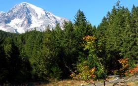 Обои ледник, лес, Mount Rainier National Park, дорога, США, гора