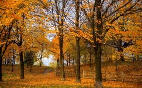 Картинка осень, листья, деревья, природа, парк, фото, забор