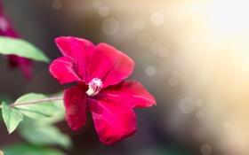 Обои цветок, веточка, фон
