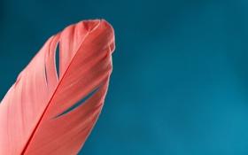 Картинка фон, перо, розовое