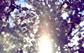 Обои небо, цвета, солнце, цветы, растительность, by mike pro