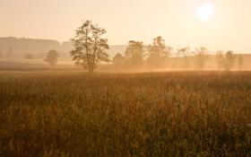 Обои поле, солнце, деревья, туман, рассвет, утро, дымка