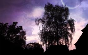 Обои небо, деревья, пейзаж, ночь, дом, фон, дерево
