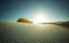 Обои фото, дерево, песок, пустыня, кусты, деревья, пейзажи
