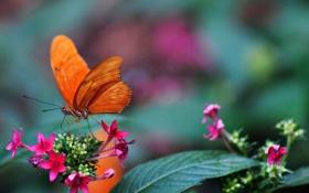 Обои бабочка, розмытость, ростения, цветы