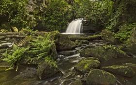 Обои лес, река, камни, Англия, водопад, папоротник, England