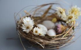 Обои цветы, гнездо, яица